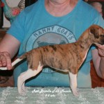 Sweet Little Jenny (RESERVED)